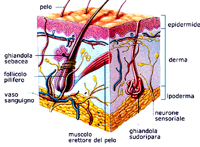 Dott. Di Mascio - Chirurgo Plastico | Medicina Estetica Cute